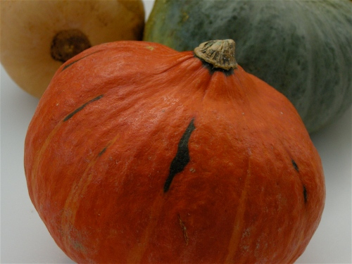 bounty-of-squash-white-background1